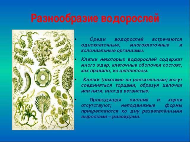 Разнообразие водорослей Среди водорослей встречаются одноклеточные, многоклет...