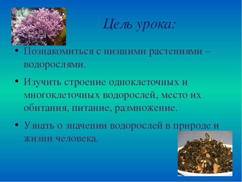 Цель урока: Познакомиться с низшими растениями – водорослями. Изучить строен...