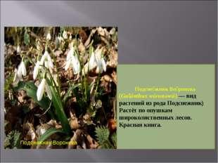 Подснежник Воронова Подсне́жник Во́ронова (Galánthus wóronowii) — вид растени