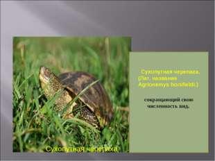 Сухопутная черепаха сокращающий свою численность вид.  Сухопутная черепаха.