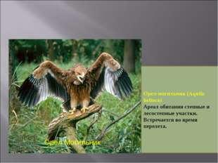 Орел Могильник Орел-могильник (Aquila heliaca) Ареал обитания степные и лесос