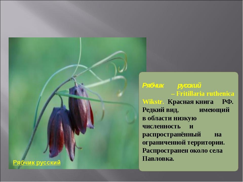 Рябчик русский Рябчик русский – Fritillaria ruthenica Wikstr. Красная книга...