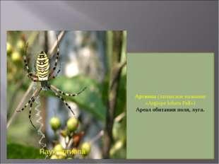 Паук Аргиопа Аргиопа (латинское название «Argiope lobata Pall») Ареал обитани