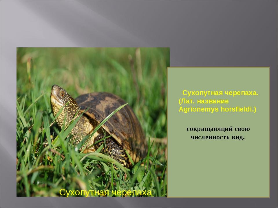 Сухопутная черепаха сокращающий свою численность вид.  Сухопутная черепаха....