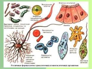 Сегодня используют такие методы изучения клеток: - рентгеноструктурный анализ