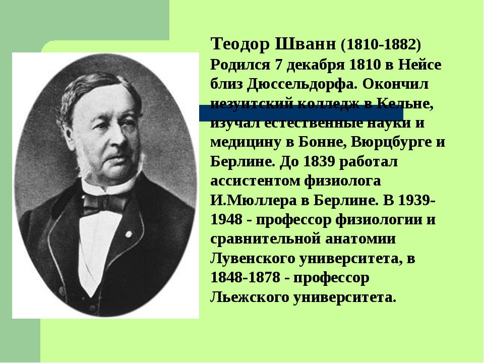 Теодор Шванн (1810-1882) Родился 7 декабря 1810 в Нейсе близ Дюссельдорфа. Ок...