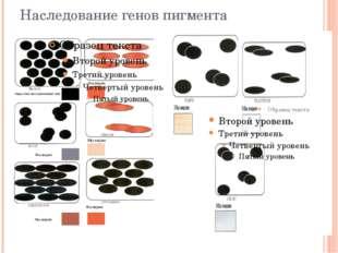 Наследование генов пигмента
