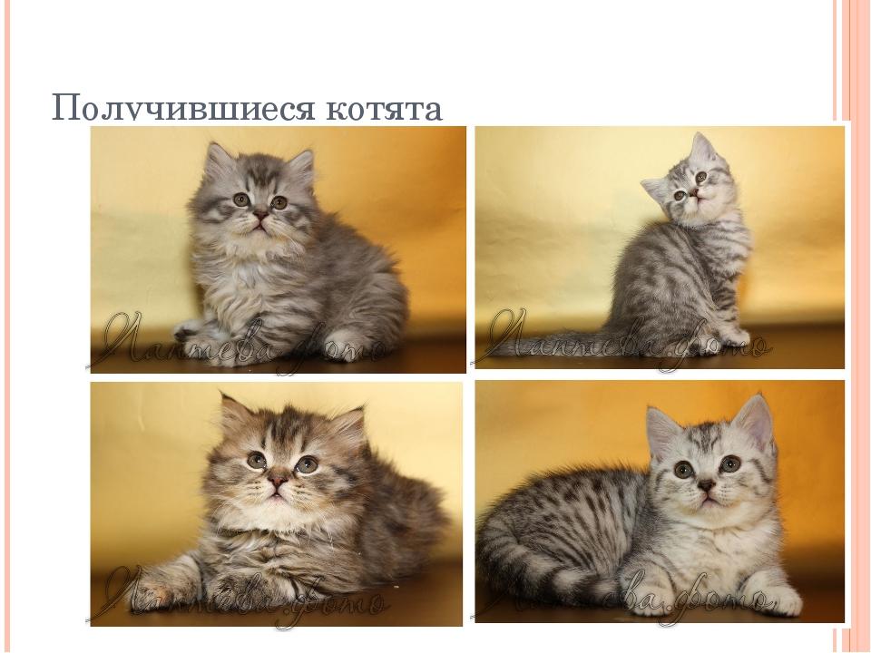 Получившиеся котята