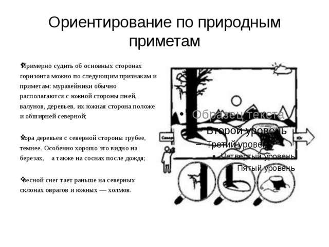 Ориентирование по природным приметам Примерно судить об основных сторонах гор...