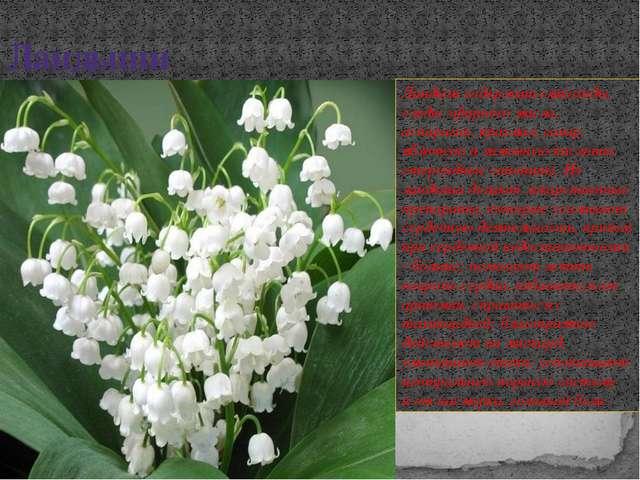 Ландыши Ландыш содержит гликозиды, следы эфирного масла, аспарагин, крахмал,...