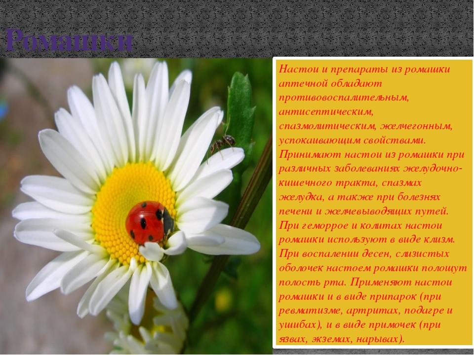 Ромашки Настои и препараты из ромашки аптечной обладают противовоспалительным...