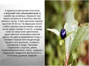 К ядовитым растениям относится ивороний глаз обыкновенныйиз семейства лилей