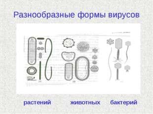 Разнообразные формы вирусов растений  животных бактерий
