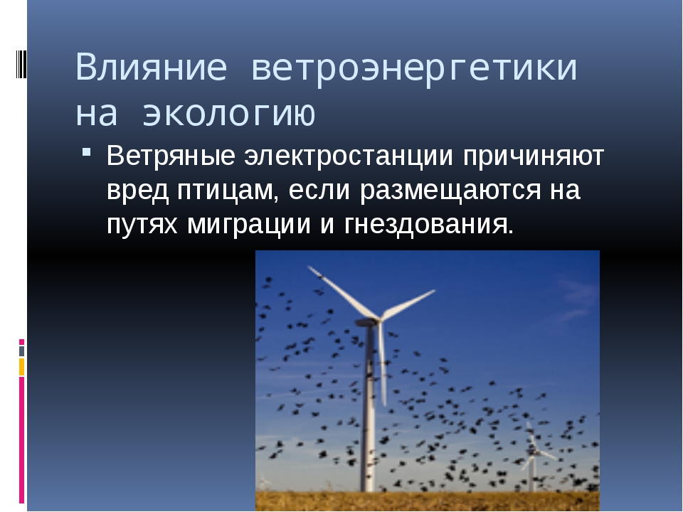 Влияние ветроэнергетики на экологию Ветряные электростанции причиняют вред пт...