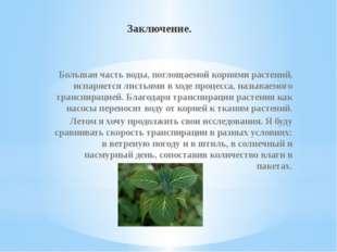 Заключение. Большая часть воды, поглощаемой корнями растений, испаряется лист