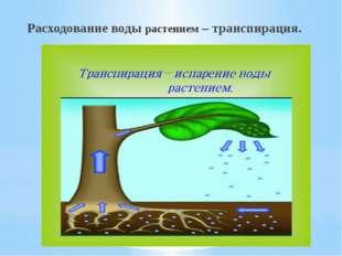 Расходование воды растением – транспирация.