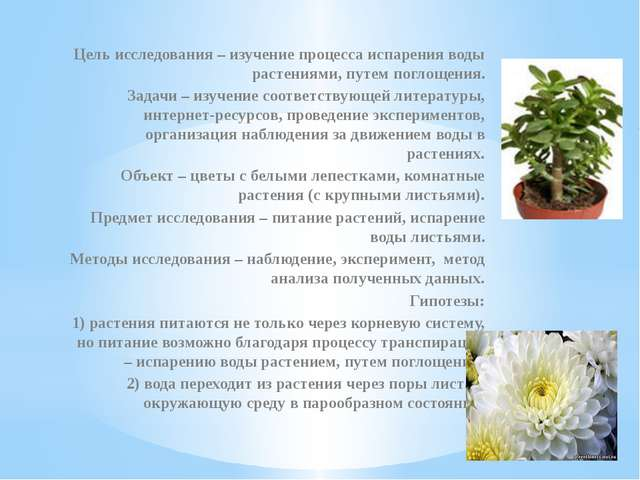 Цель исследования – изучение процесса испарения воды растениями, путем поглощ...