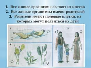 Все живые организмы состоят из клеток Все живые организмы имеют родителей Род
