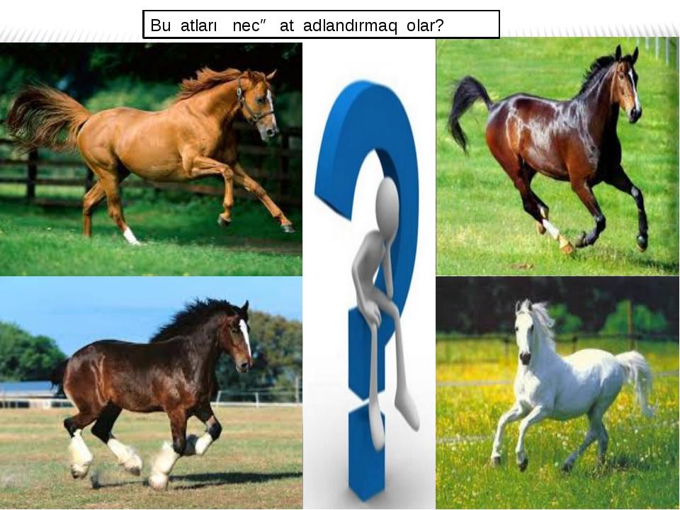 Bu atları necə at adlandırmaq olar?