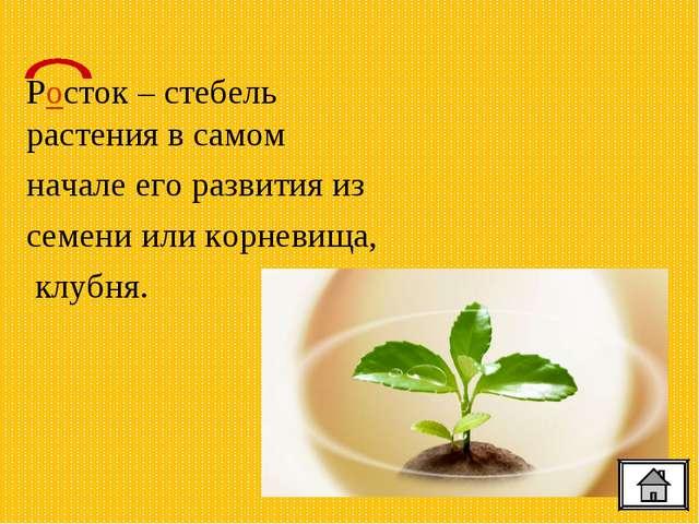 Росток – стебель растения в самом начале его развития из семени или корневищ...