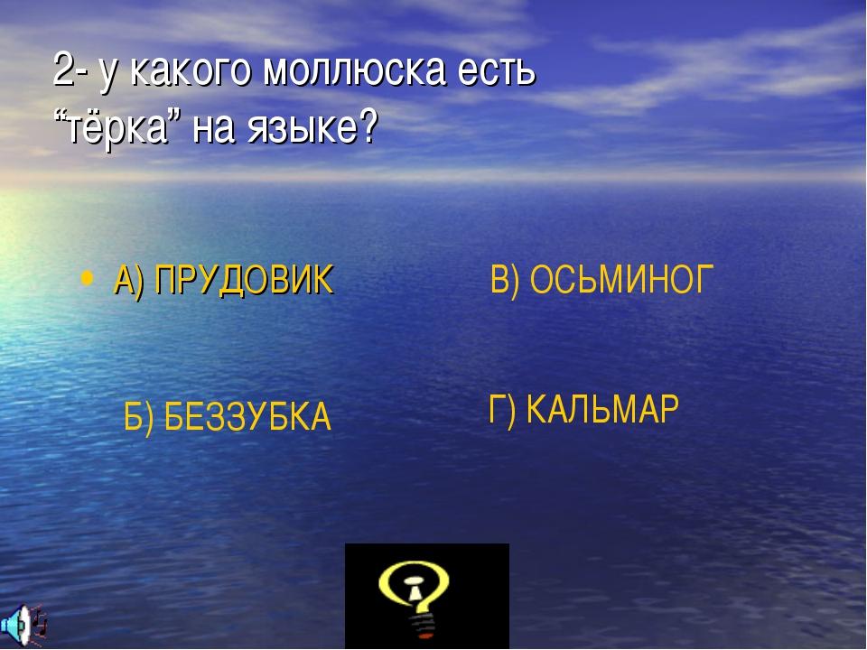 """2- у какого моллюска есть """"тёрка"""" на языке? А) ПРУДОВИК Б) БЕЗЗУБКА В) ОСЬМИН..."""