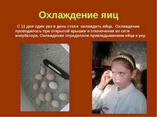Охлаждение яиц С 11 дня один раз в день стали охлаждать яйца. Охлаждение пров