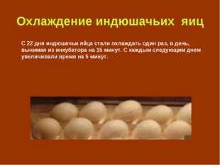 Охлаждение индюшачьих яиц С 22 дня индюшачьи яйца стали охлаждать один раз, в