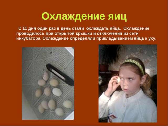 Охлаждение яиц С 11 дня один раз в день стали охлаждать яйца. Охлаждение пров...