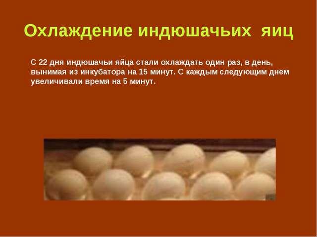 Охлаждение индюшачьих яиц С 22 дня индюшачьи яйца стали охлаждать один раз, в...