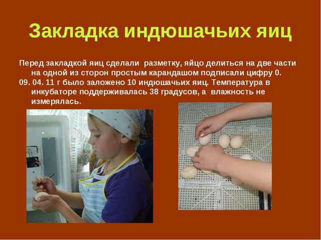 Закладка индюшачьих яиц Перед закладкой яиц сделали разметку, яйцо делиться н...