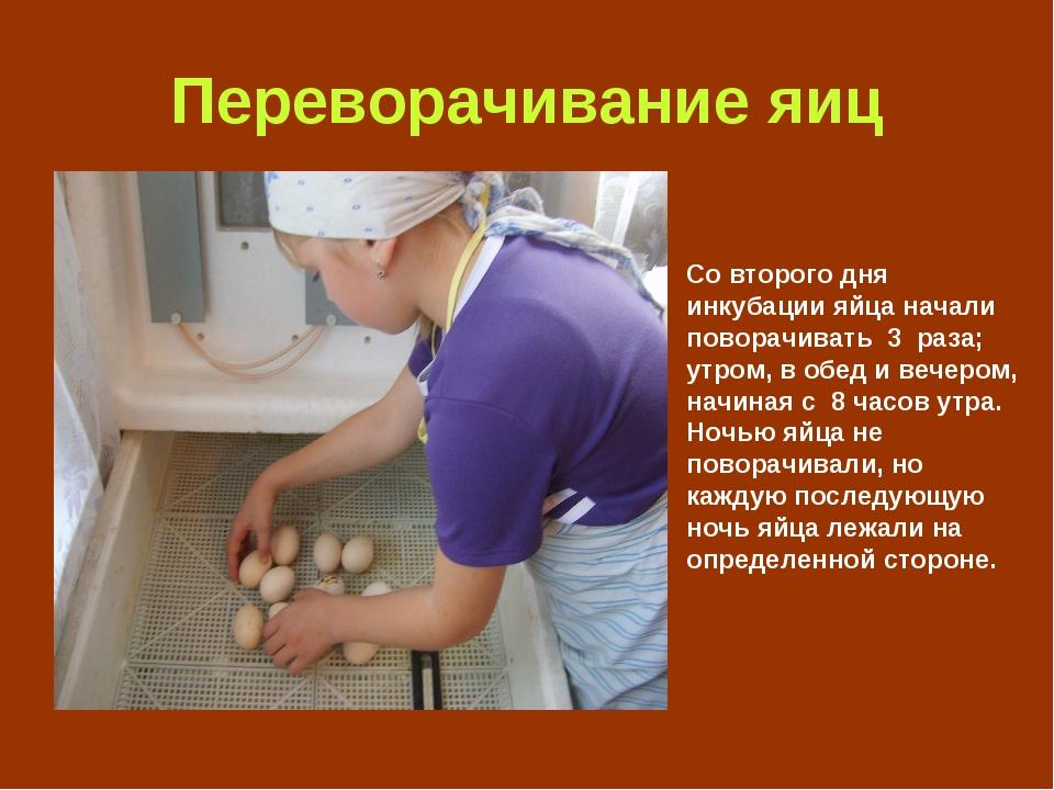 Переворачивание яиц Со второго дня инкубации яйца начали поворачивать 3 раза;...