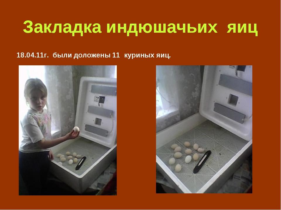 Закладка индюшачьих яиц 18.04.11г. были доложены 11 куриных яиц.