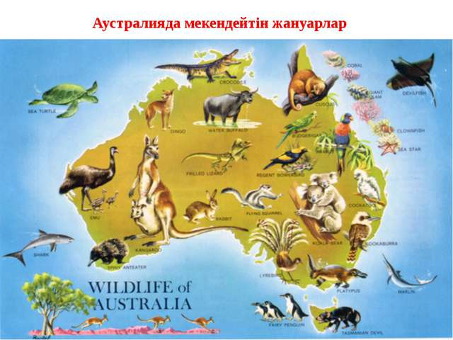 Аустралияда мекендейтін жануарлар