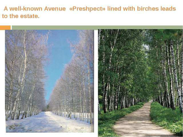A well-known Avenue «Preshpect» lined with birches leads to the estate.
