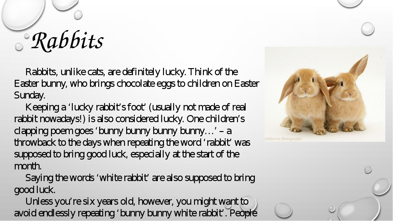 Rabbits Rabbits, unlike cats, are definitely lucky. Think of the Easter bunny...