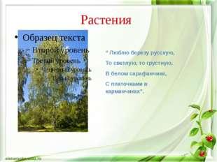 """Растения """" Люблю березу русскую, То светлую, то грустную, В белом сарафанчике"""