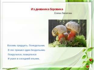 Из дневника боровика Елена Липатова Восемь тридцать. Понедельник. В лес приш