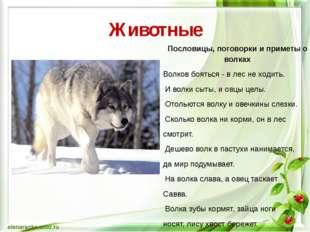 Животные Пословицы, поговорки и приметы о волках Волков бояться - в лес не хо