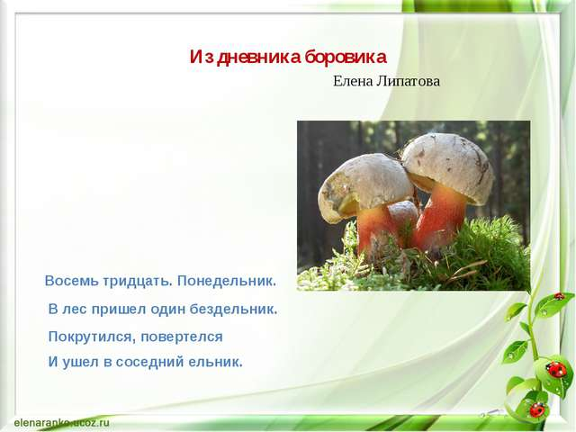 Из дневника боровика Елена Липатова Восемь тридцать. Понедельник. В лес приш...