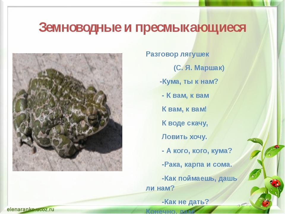 Земноводные и пресмыкающиеся Разговор лягушек (С. Я. Маршак) -Кума, ты к нам?...