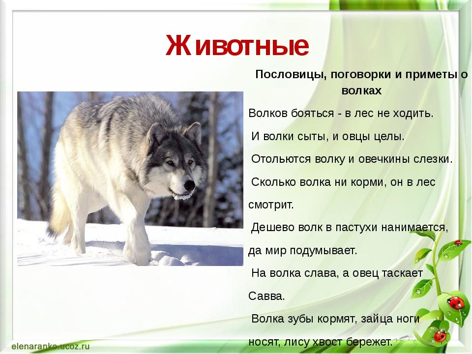 Животные Пословицы, поговорки и приметы о волках Волков бояться - в лес не хо...