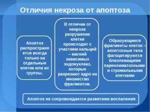 Отличия некроза от апоптоза Апоптоз распространяется всегда только на отдельн