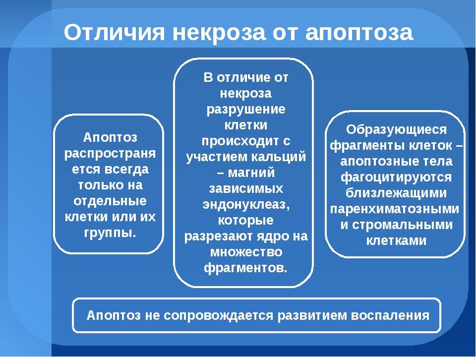 Отличия некроза от апоптоза Апоптоз распространяется всегда только на отдельн...