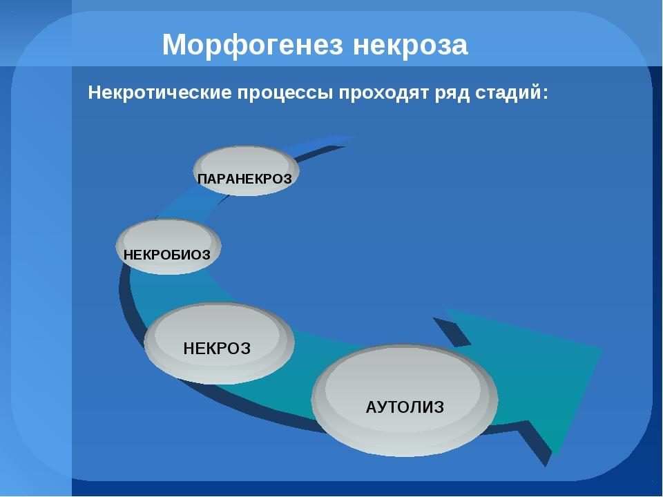 Морфогенез некроза Некротические процессы проходят ряд стадий: