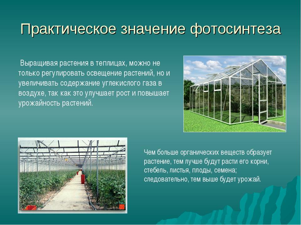 Практическое значение фотосинтеза Выращивая растения в теплицах, можно не тол...