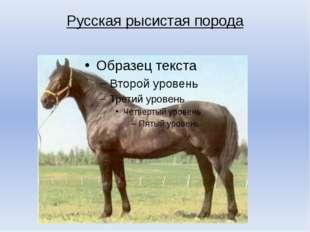 Русская рысистая порода