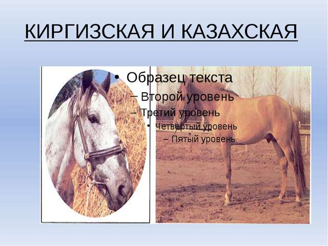 КИРГИЗСКАЯ И КАЗАХСКАЯ