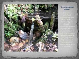 Известный целебный источник на реке Белый Ключ – притоке Иржи. Вода его обога