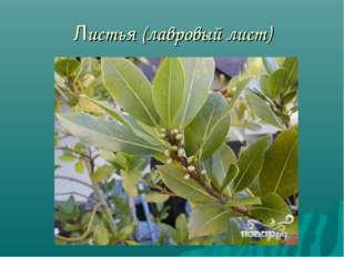 Листья (лавровый лист)