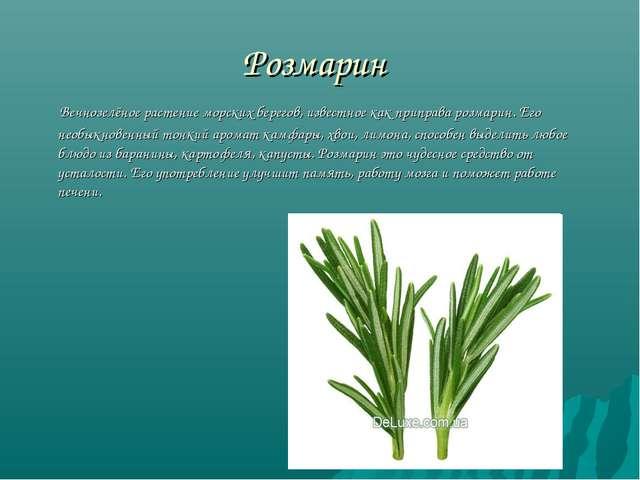 Розмарин Вечнозелёное растение морских берегов, известное как приправа розмар...